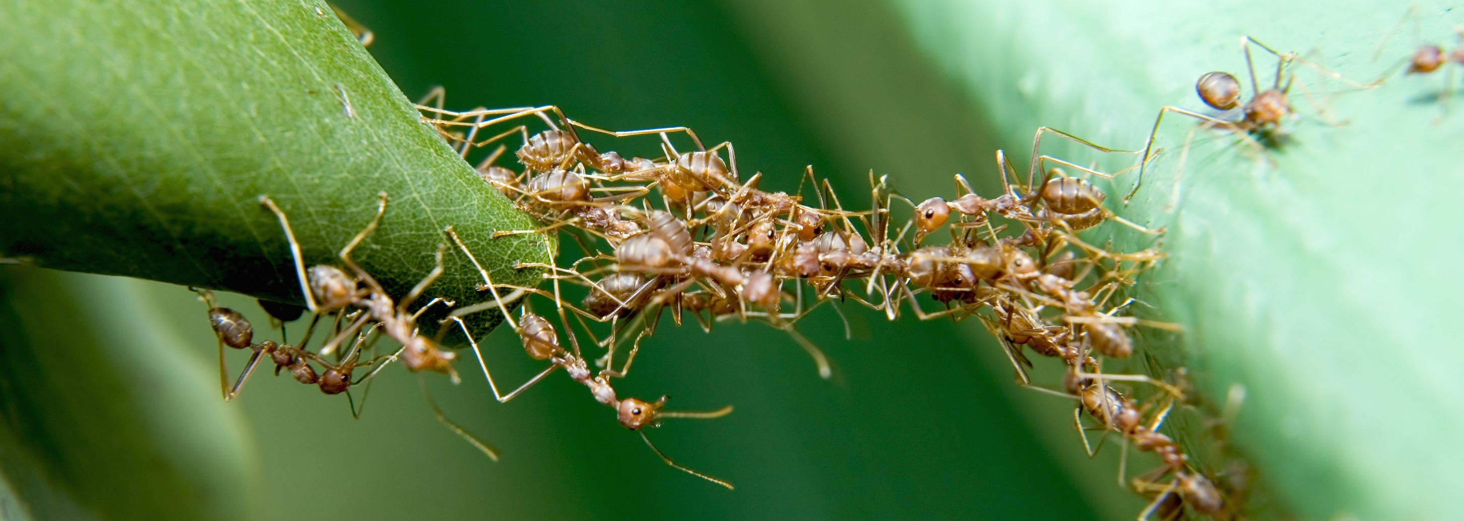 Licensed - ant bridge - Version 2
