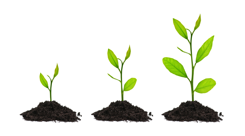 tree-seeds